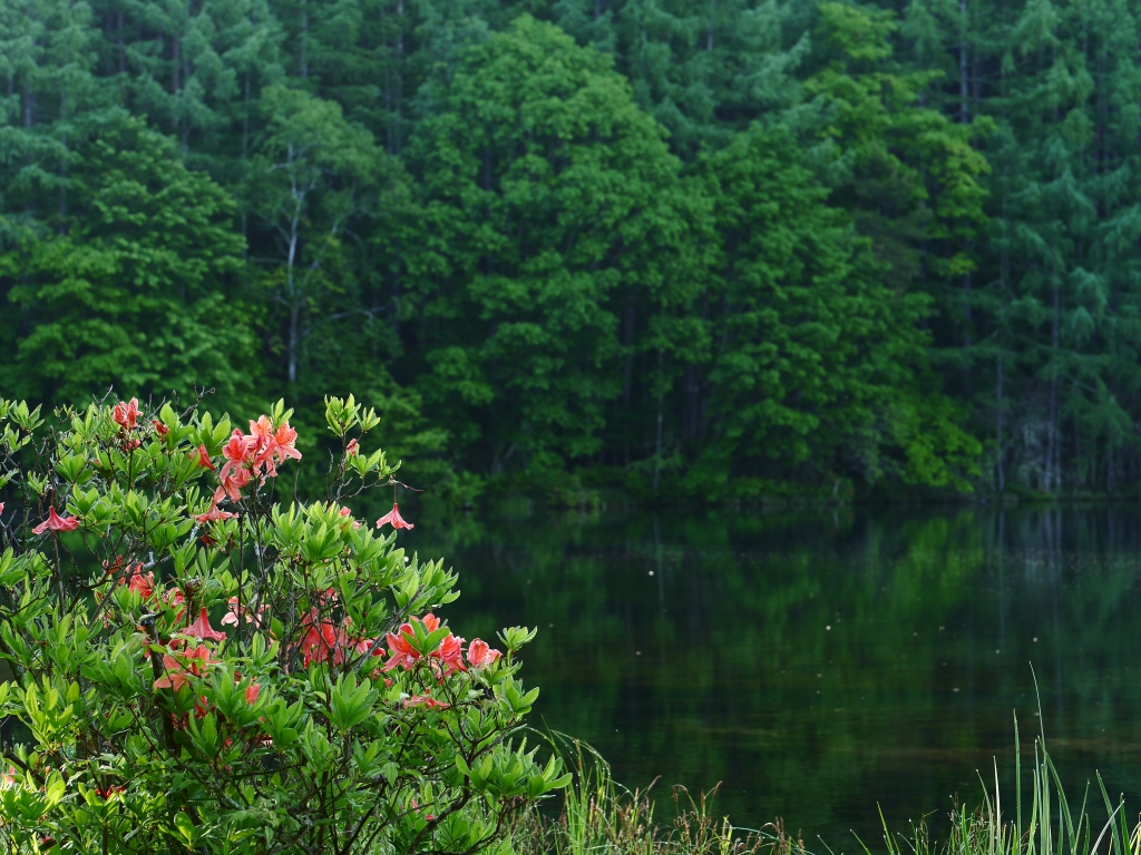 梅雨間の御射鹿池試写16