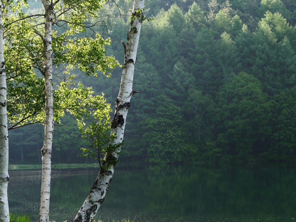 梅雨間の御射鹿池試写7