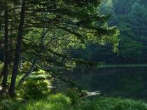 梅雨間の御射鹿池試写17