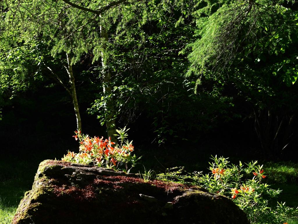 梅雨間の御射鹿池試写14