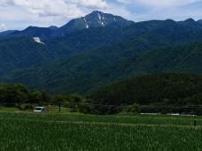 初夏の緑4