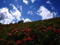 初夏の美ヶ原9