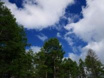 落葉松の緑3