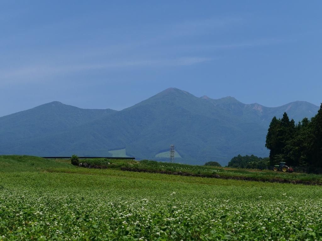 夏空の八ヶ岳と蕎麦畑