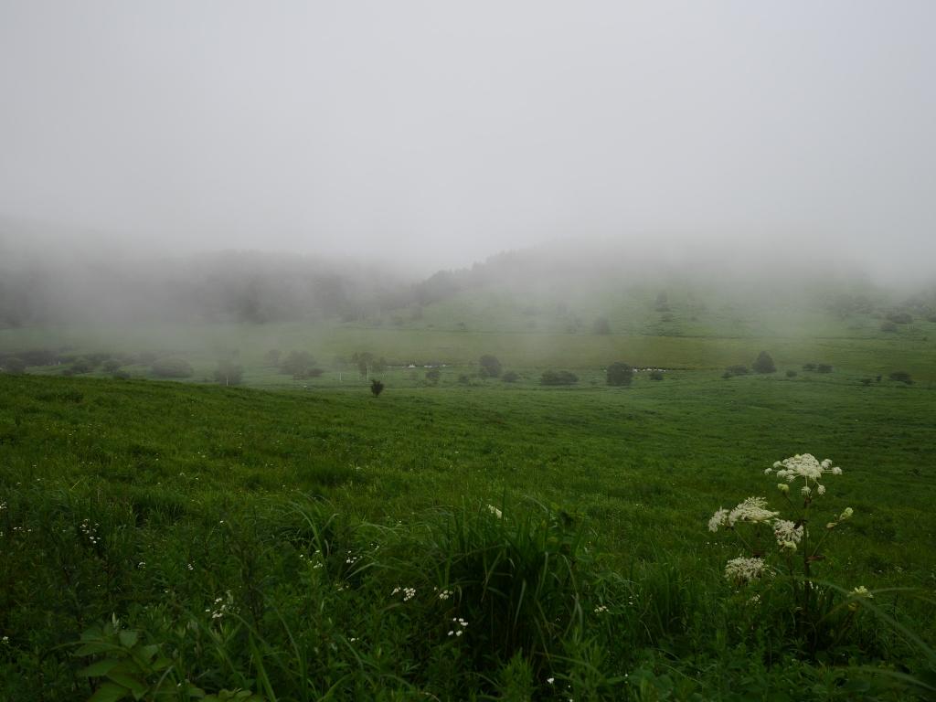 霧の池のくるみとミヤマシシウド2