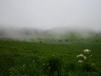 霧の池のくるみとノダケ2