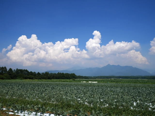 沸き立つ雲と高原野菜の畑