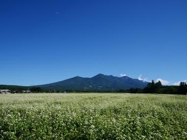 秋晴れの空と八ヶ岳を望む蕎麦畑1