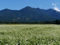 秋晴れの空と八ヶ岳を望む蕎麦畑3