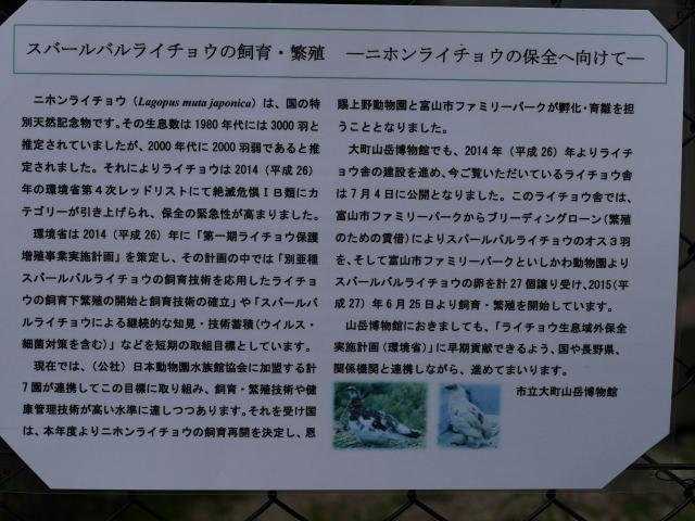 大町山岳博物館付属園スバールバルライチョウ説明板2