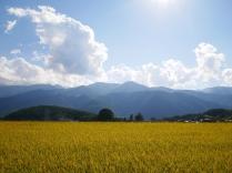 黄金色の景色9