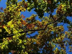 秋色の野辺山19