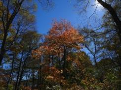 秋色の野辺山23