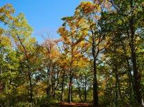 秋色の野辺山15