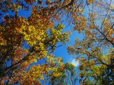秋色の野辺山21