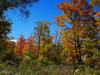 秋色の野辺山11