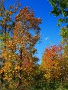 秋色の野辺山12