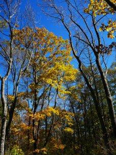 秋色の野辺山1