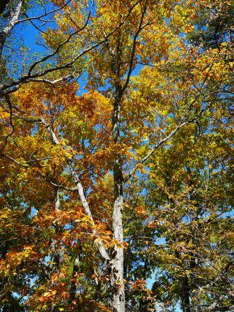 秋色の野辺山20