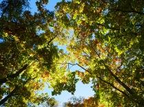 秋色の野辺山18