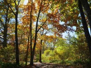 秋色の野辺山3