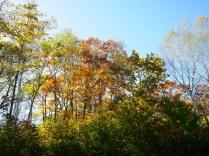 秋色の野辺山5