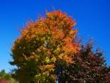 秋色の野辺山14
