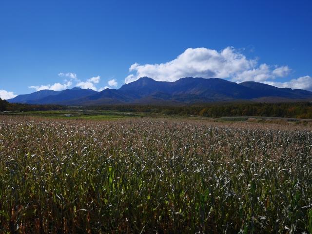 秋色の野辺山22