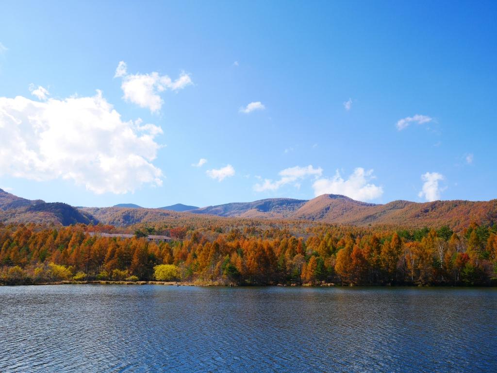 秋色の八ヶ岳5
