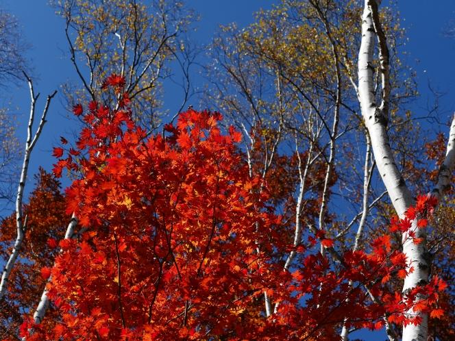 autumn color from Mt.Yatsugatake(八ヶ岳の懐で彩を追って)2015.10.18