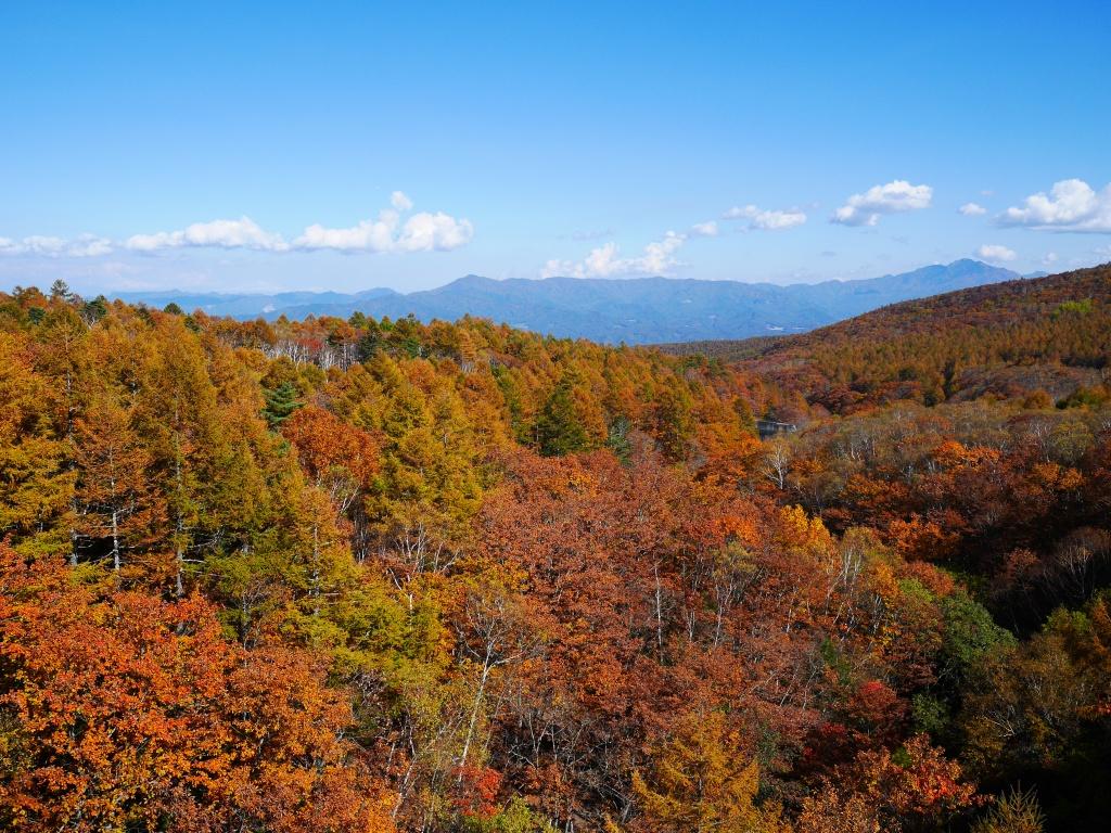 秋色の八ヶ岳6