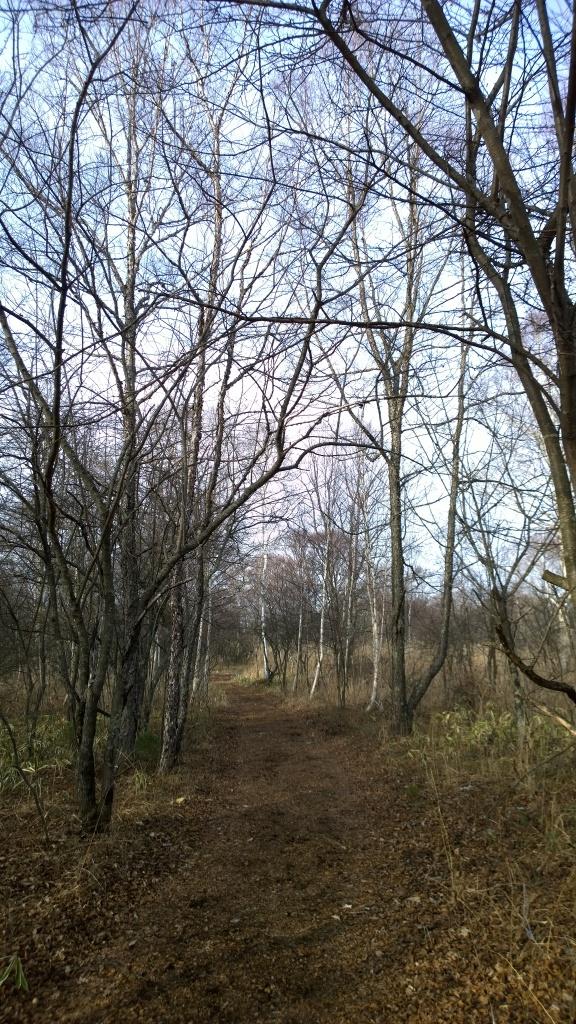 八ヶ岳演習林の遊歩道1