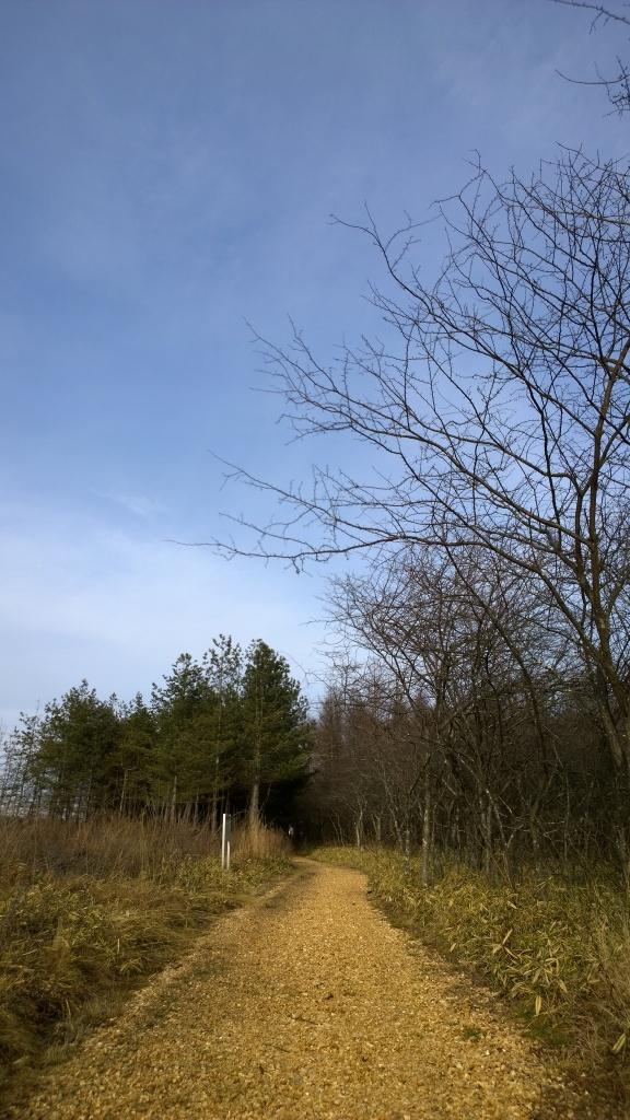 八ヶ岳演習林の遊歩道2