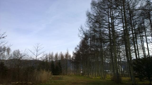 八ヶ岳演習林の遊歩道3
