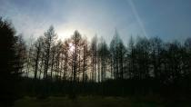 演習林内の残存林1