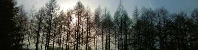 野辺山の新しいスポットは、ちょっと学研的な歳月を経てゆっくりと変わりゆく箱庭として(一般開放された筑波大学八ヶ岳演習林「恵みの森」)