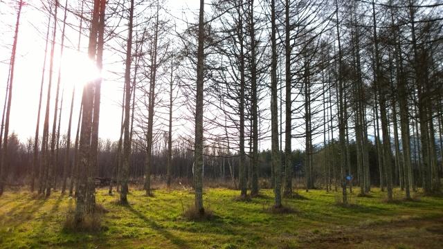 演習林内の残存林2
