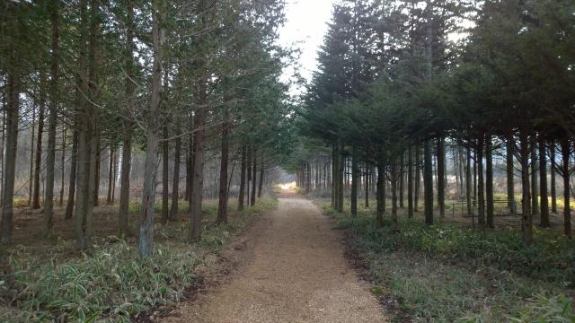 八ヶ岳演習林の遊歩道5