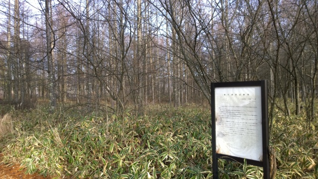 野辺山演習林の極相の解説板