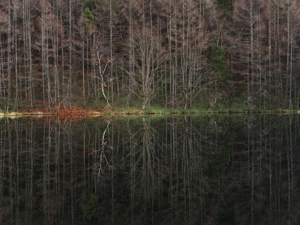 初冬の御射鹿池、鏡像1