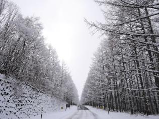 樹氷と雪原の野辺山3