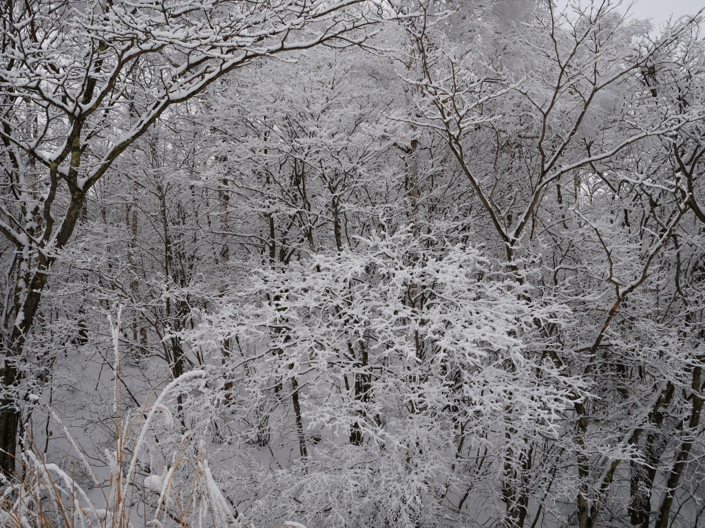 樹氷と雪原の野辺山4