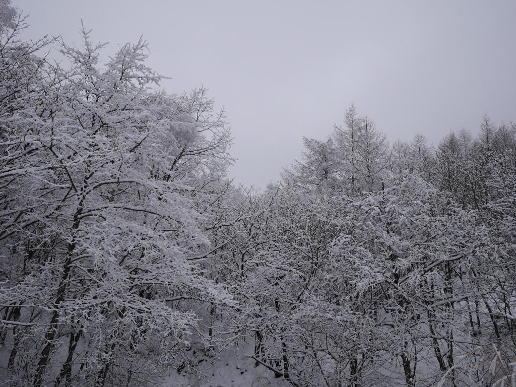 樹氷と雪原の野辺山6