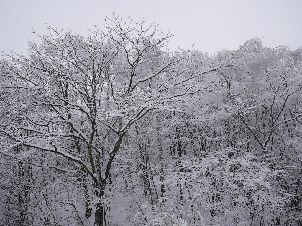 樹氷と雪原の野辺山5