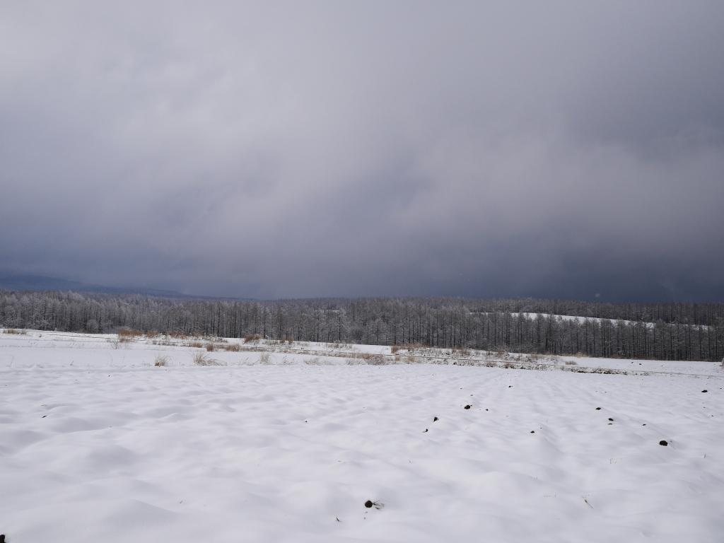 樹氷と雪原の野辺山9