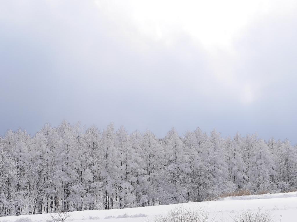 樹氷と雪原の野辺山1