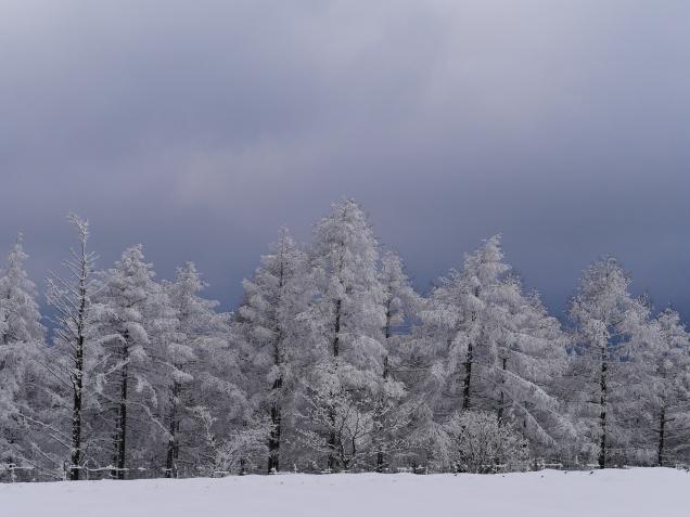 樹氷と雪原の野辺山13