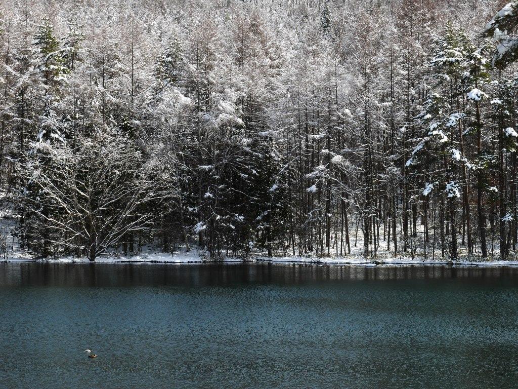 御射鹿池の樹氷8