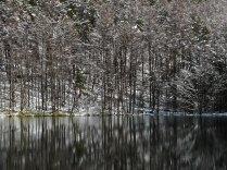 御射鹿池の樹氷6