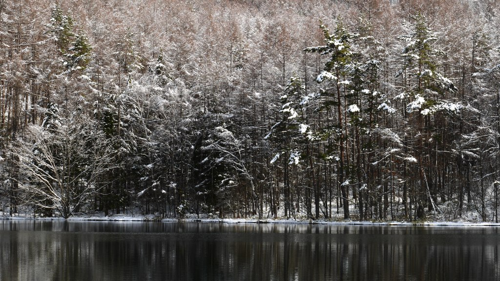御射鹿池の樹氷2
